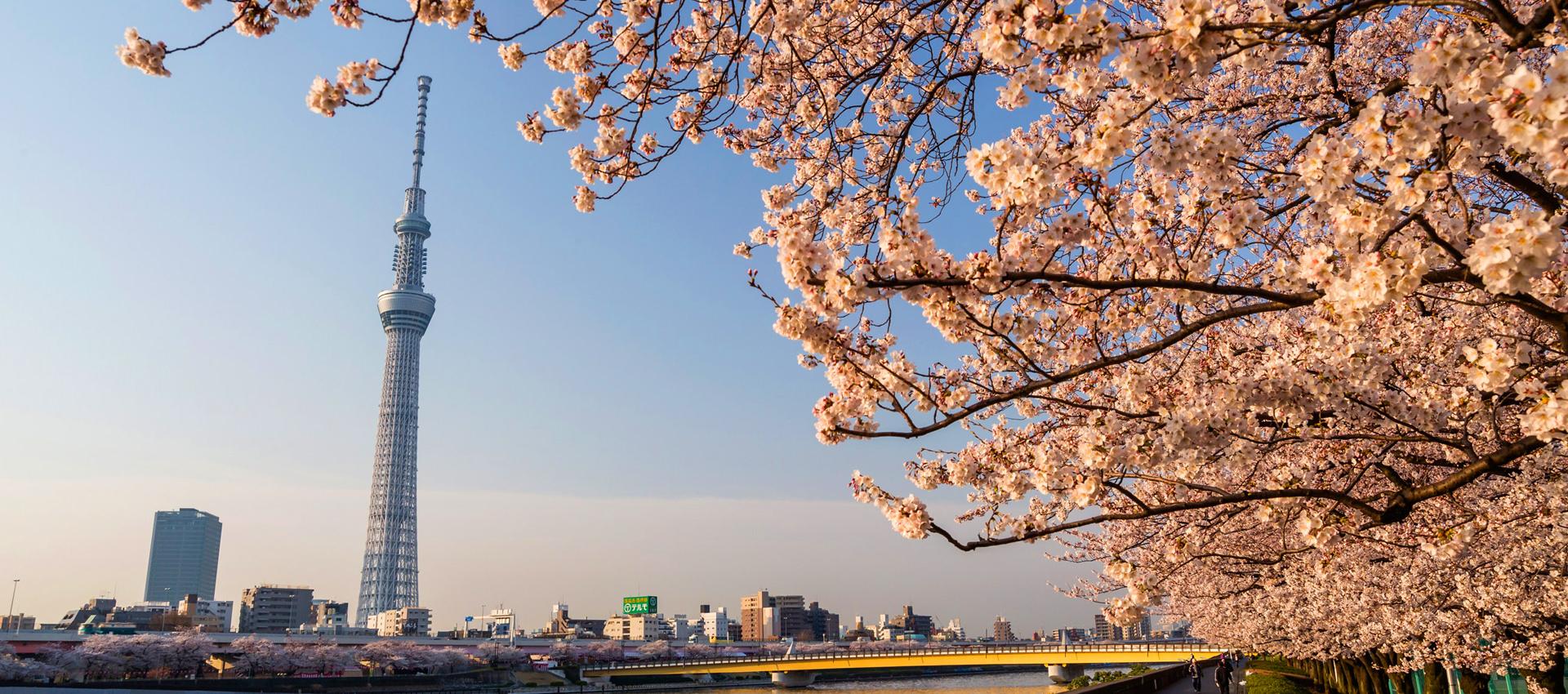SAP Ariba Live Tokyo happens July 23, 2019